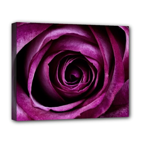 Deep Purple Rose Deluxe Canvas 20  x 16  (Framed)