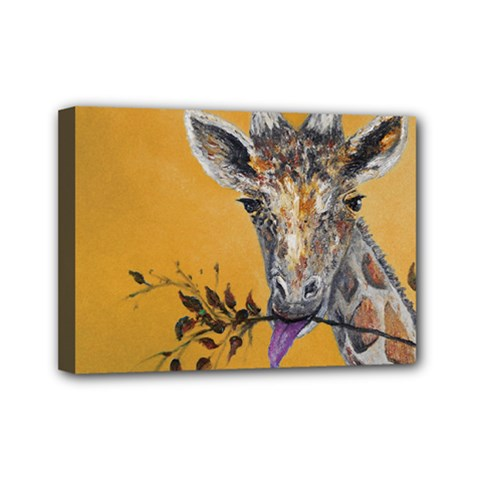 Giraffe Treat Mini Canvas 7  x 5  (Framed)
