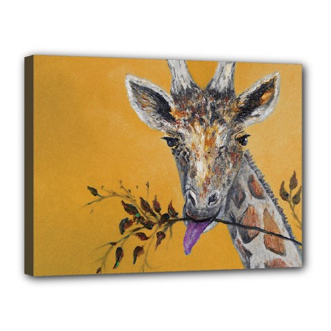 Giraffe Treat Canvas 16  x 12  (Framed)