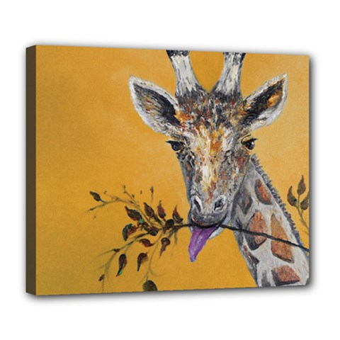 Giraffe Treat Deluxe Canvas 24  x 20  (Framed)