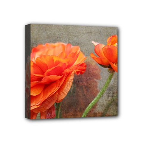 Orange Rose From Bud To Bloom Mini Canvas 4  x 4  (Framed)