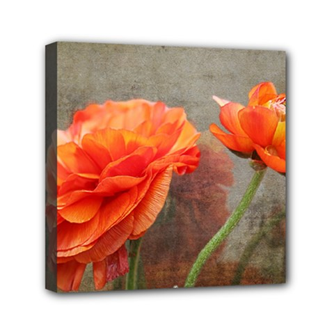 Orange Rose From Bud To Bloom Mini Canvas 6  x 6  (Framed)