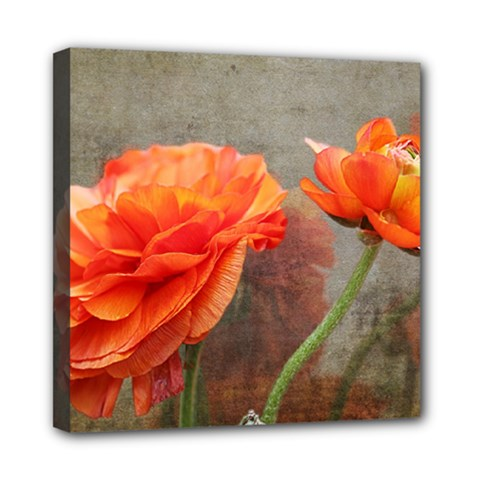 Orange Rose From Bud To Bloom Mini Canvas 8  x 8  (Framed)