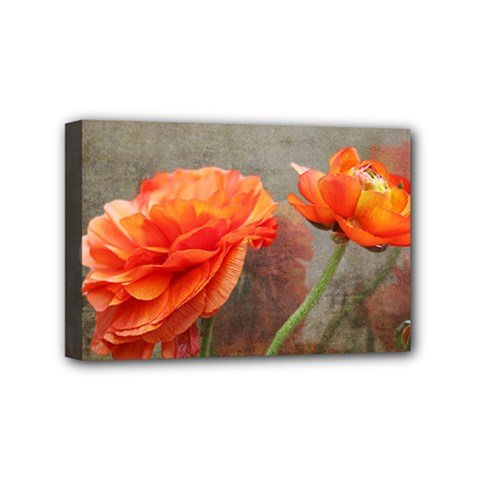 Orange Rose From Bud To Bloom Mini Canvas 6  X 4  (framed)