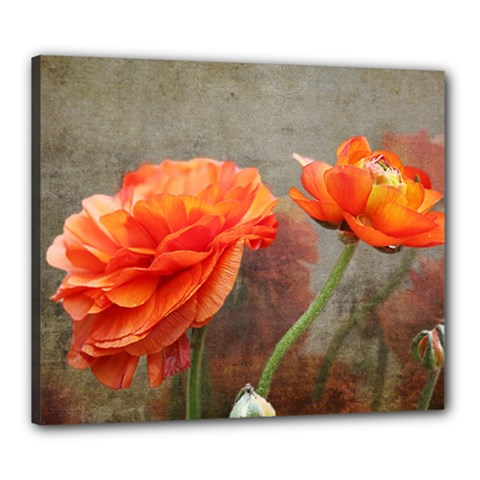 Orange Rose From Bud To Bloom Canvas 24  x 20  (Framed)
