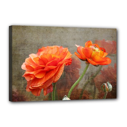 Orange Rose From Bud To Bloom Canvas 18  x 12  (Framed)