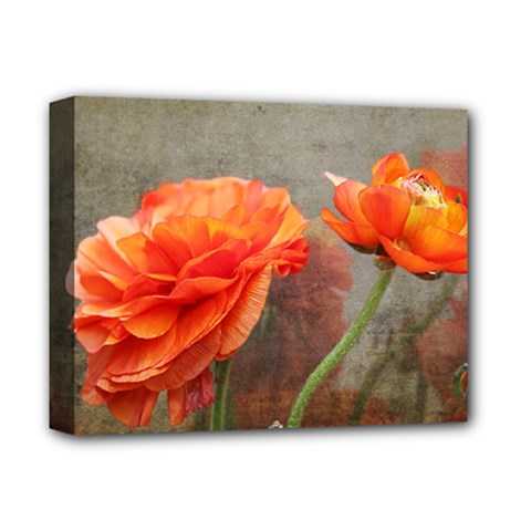 Orange Rose From Bud To Bloom Deluxe Canvas 14  x 11  (Framed)