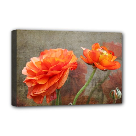 Orange Rose From Bud To Bloom Deluxe Canvas 18  x 12  (Framed)
