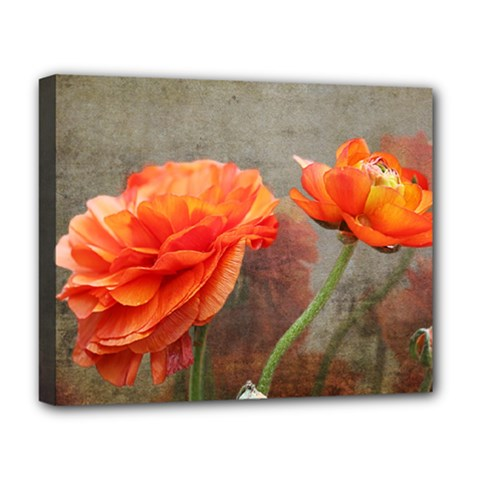 Orange Rose From Bud To Bloom Deluxe Canvas 20  x 16  (Framed)
