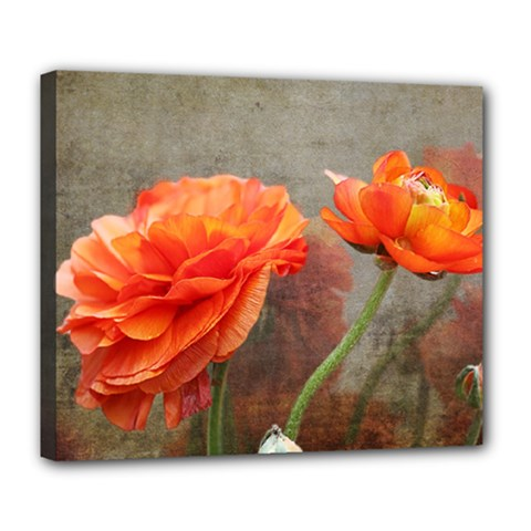 Orange Rose From Bud To Bloom Deluxe Canvas 24  x 20  (Framed)