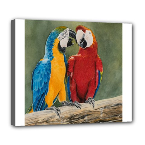 Feathered Friends Deluxe Canvas 24  x 20  (Framed)