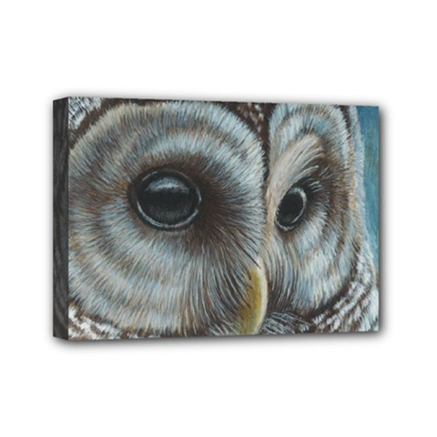 Barred Owl Mini Canvas 7  X 5  (framed)