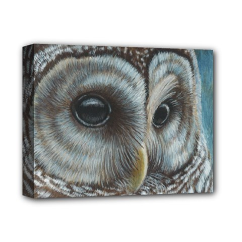 Barred Owl Deluxe Canvas 14  x 11  (Framed)