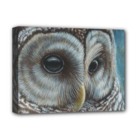 Barred Owl Deluxe Canvas 16  x 12  (Framed)