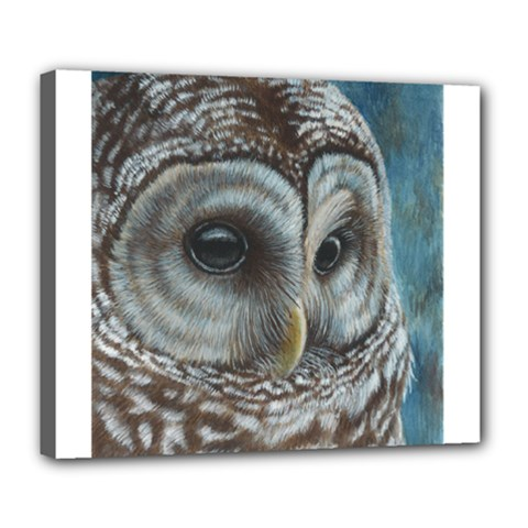Barred Owl Deluxe Canvas 24  x 20  (Framed)