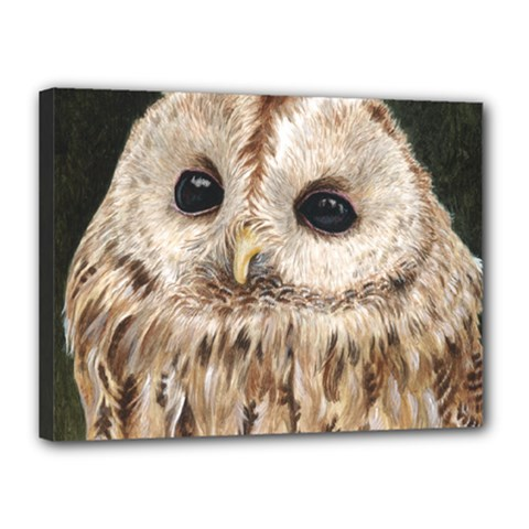 Tawny Owl Canvas 16  x 12  (Framed)