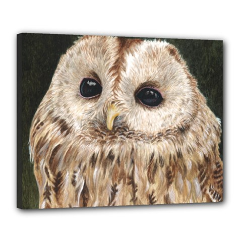 Tawny Owl Canvas 20  x 16  (Framed)