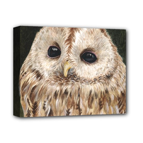 Tawny Owl Deluxe Canvas 14  x 11  (Framed)