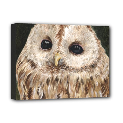 Tawny Owl Deluxe Canvas 16  x 12  (Framed)