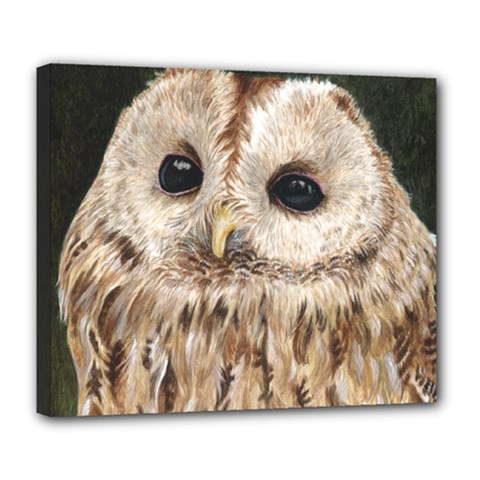 Tawny Owl Deluxe Canvas 24  x 20  (Framed)