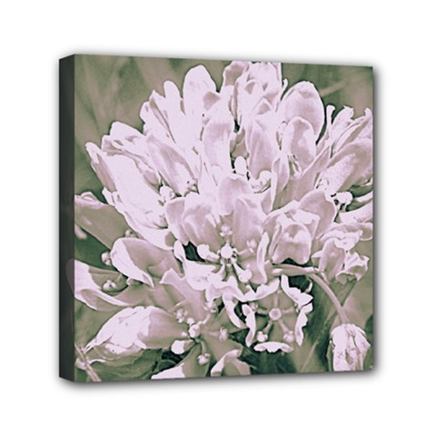 White Flower Mini Canvas 6  x 6  (Framed)
