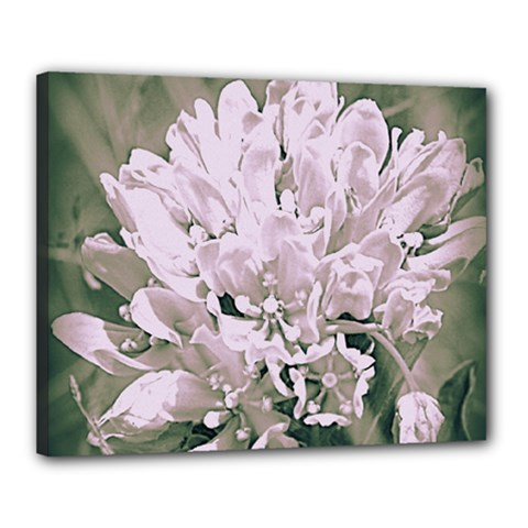 White Flower Canvas 20  x 16  (Framed)