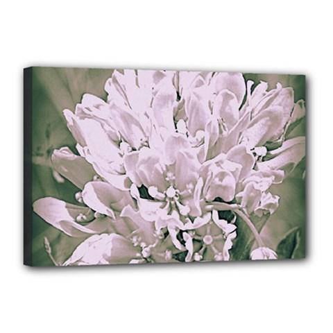 White Flower Canvas 18  x 12  (Framed)