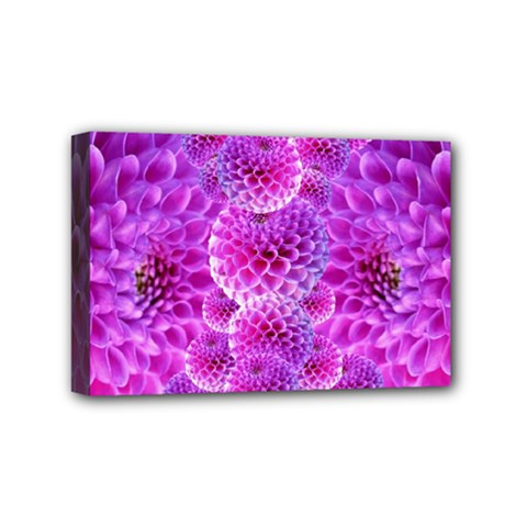 Purple Dahlias Mini Canvas 6  X 4  (framed)