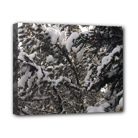 Snowy Trees Canvas 10  x 8  (Framed)