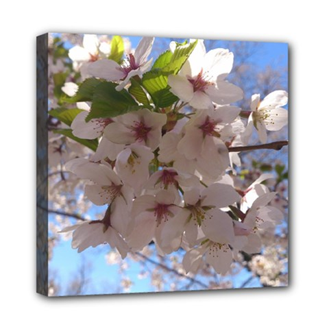 Sakura Mini Canvas 8  x 8  (Framed)
