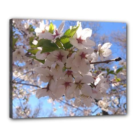 Sakura Canvas 20  x 16  (Framed)