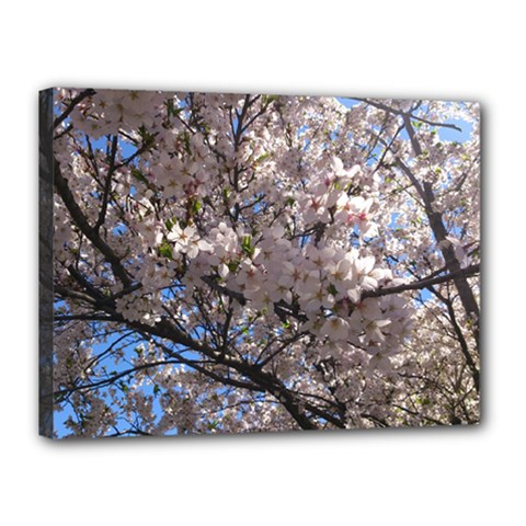 Sakura Tree Canvas 16  X 12  (framed)