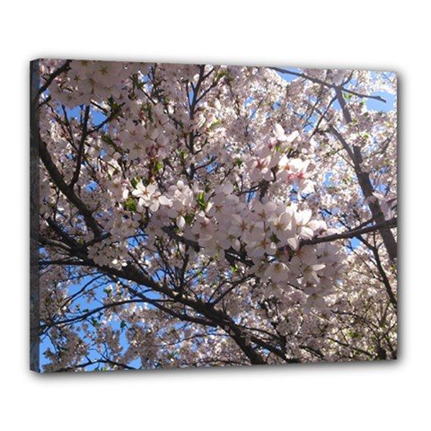 Sakura Tree Canvas 20  x 16  (Framed)