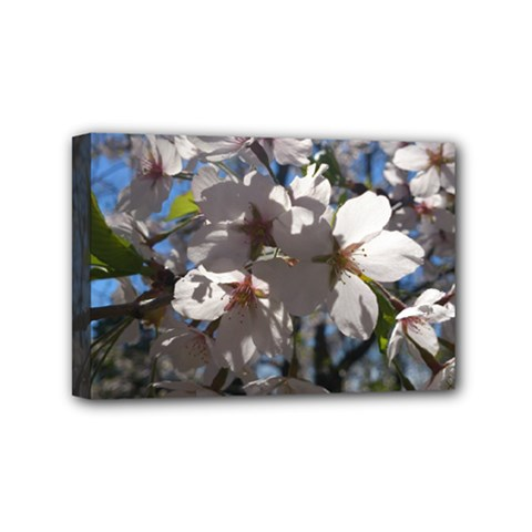 Cherry Blossoms Mini Canvas 6  x 4  (Framed)