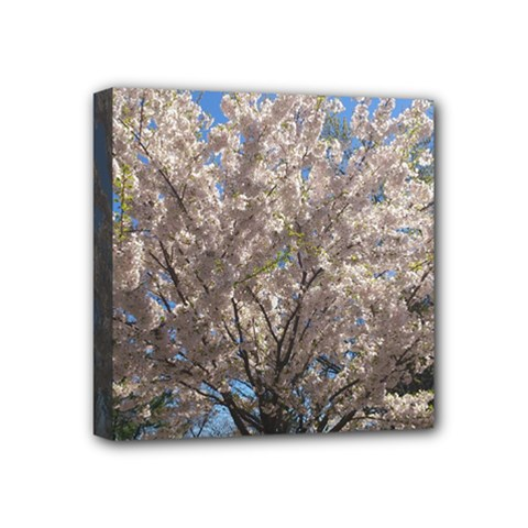 Cherry Blossoms Tree Mini Canvas 4  x 4  (Framed)