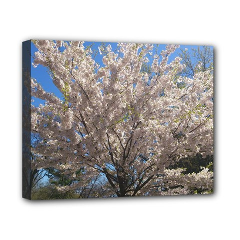 Cherry Blossoms Tree Canvas 10  x 8  (Framed)