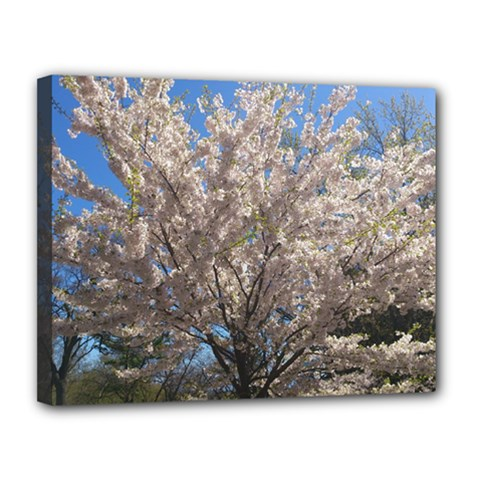 Cherry Blossoms Tree Canvas 14  x 11  (Framed)