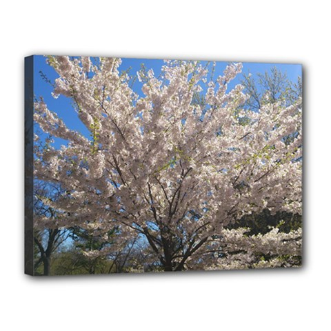 Cherry Blossoms Tree Canvas 16  X 12  (framed)