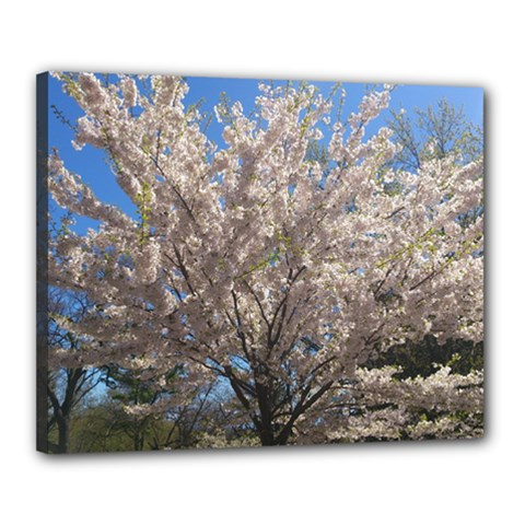 Cherry Blossoms Tree Canvas 20  x 16  (Framed)