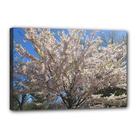 Cherry Blossoms Tree Canvas 18  x 12  (Framed)