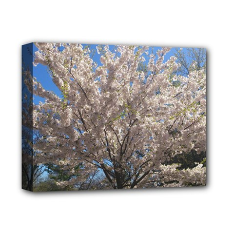 Cherry Blossoms Tree Deluxe Canvas 14  X 11  (framed)