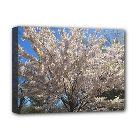 Cherry Blossoms Tree Deluxe Canvas 16  X 12  (framed)