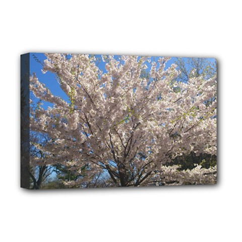 Cherry Blossoms Tree Deluxe Canvas 18  X 12  (framed)