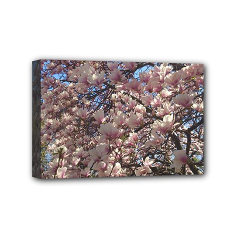 Sakura Mini Canvas 6  X 4  (framed)