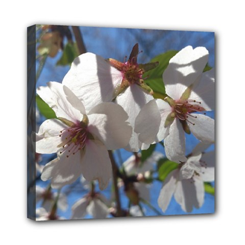 Cherry Blossoms Mini Canvas 8  x 8  (Framed)