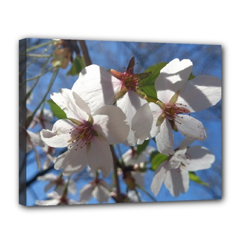 Cherry Blossoms Canvas 14  x 11  (Framed)