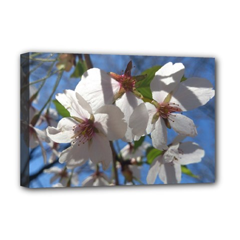 Cherry Blossoms Deluxe Canvas 18  x 12  (Framed)