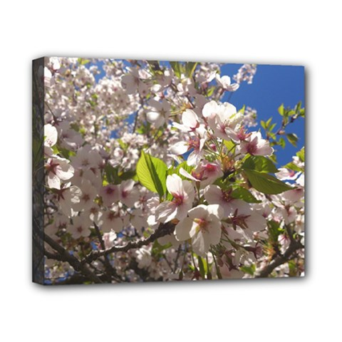 Cherry Blossoms Canvas 10  X 8  (framed)
