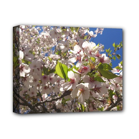 Cherry Blossoms Deluxe Canvas 14  X 11  (framed)