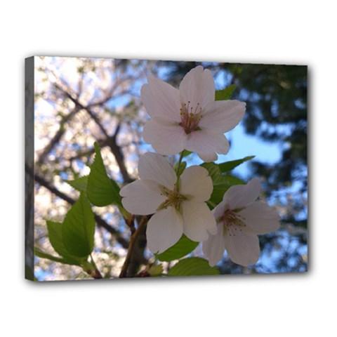 Sakura Canvas 16  X 12  (framed)
